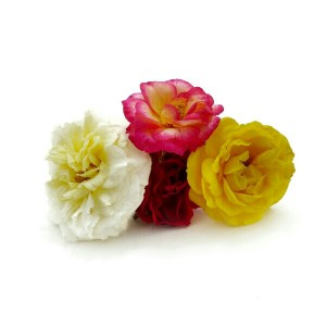 Mini rosas-01